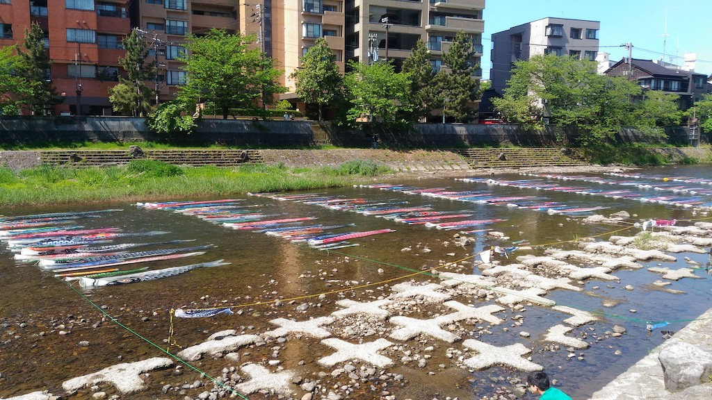 金沢の一風変わった、こいのぼり!「鯉流し」は浅野川を泳ぎ、橋の下で舞うんです