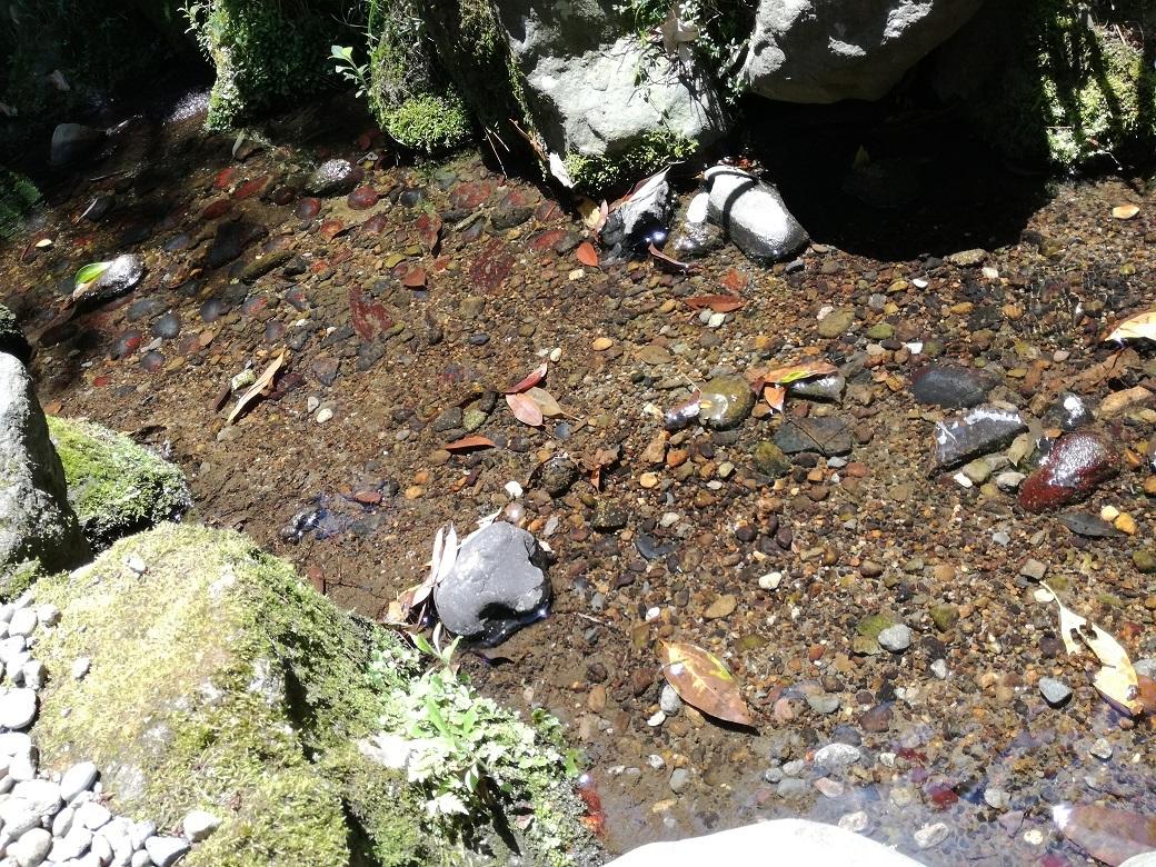 【白鳥路ホタル観賞】街中で蛍が見られるなんて!金沢の自然に大興奮★