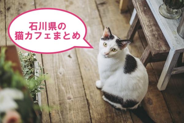 県 石川 保護 猫